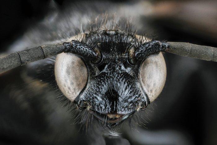 Почему мух привлекают неприятные запахи?
