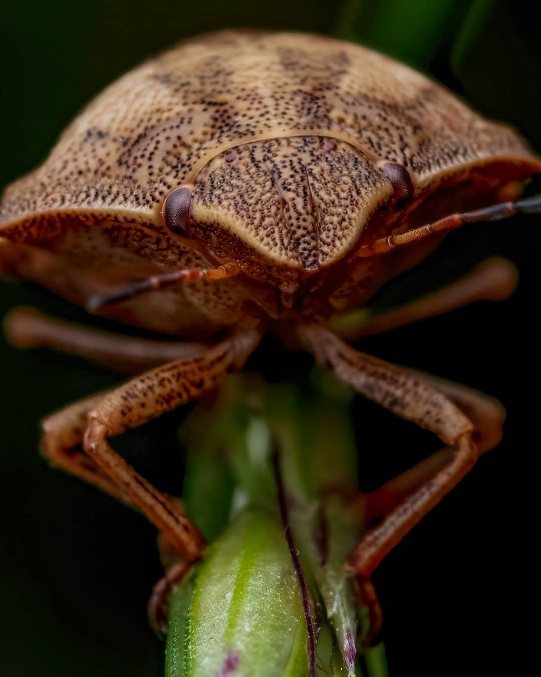 Удивительные макроснимки насекомых от Рори Джеймса Льюиса