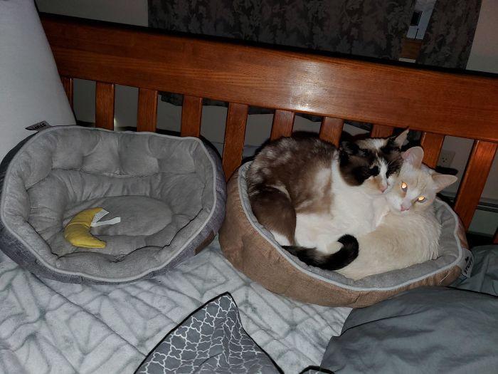 Удобные кошачьи лежаки и кошачья логика