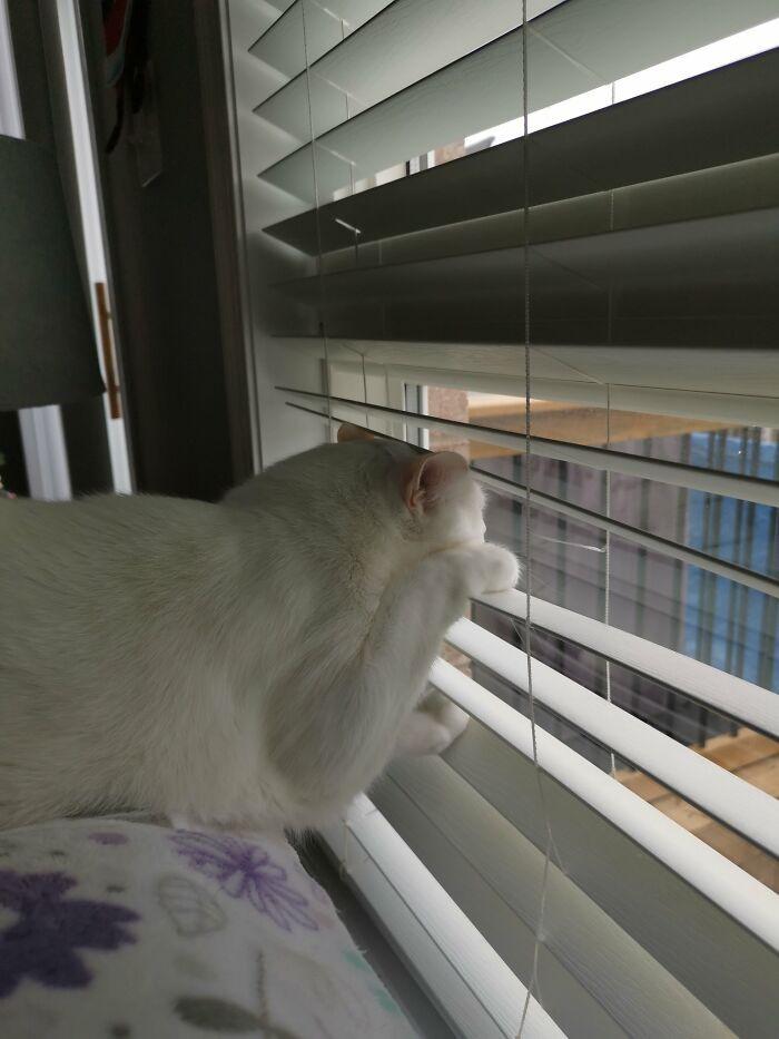 Любопытные наблюдатели за окном, от которых не скроется ни одна деталь