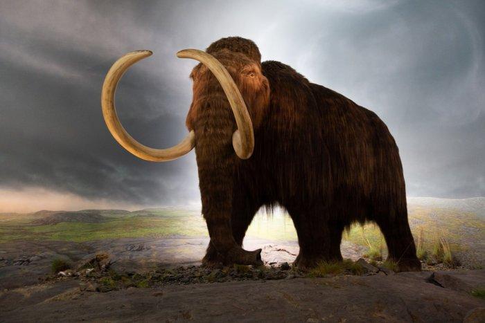 Почему учёные не смогли клонировать мамонта?