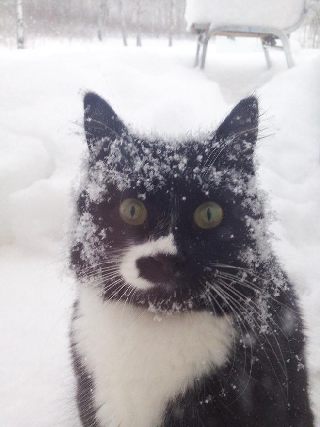 Домашние котики, которые впервые увидели снег