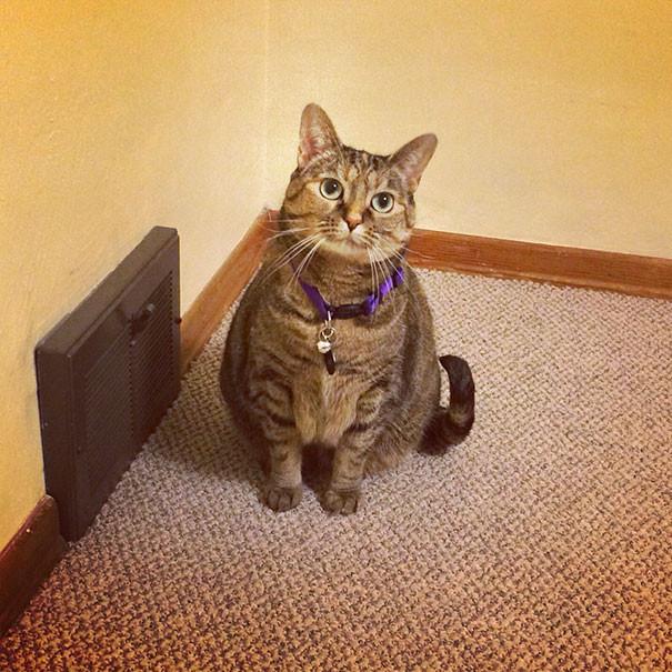 Котики всегда помогут найти самое тёплое место в доме