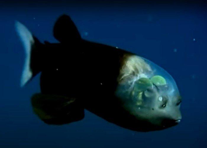 Какие существа обитают в Марианской впадине на глубине 11 километров?
