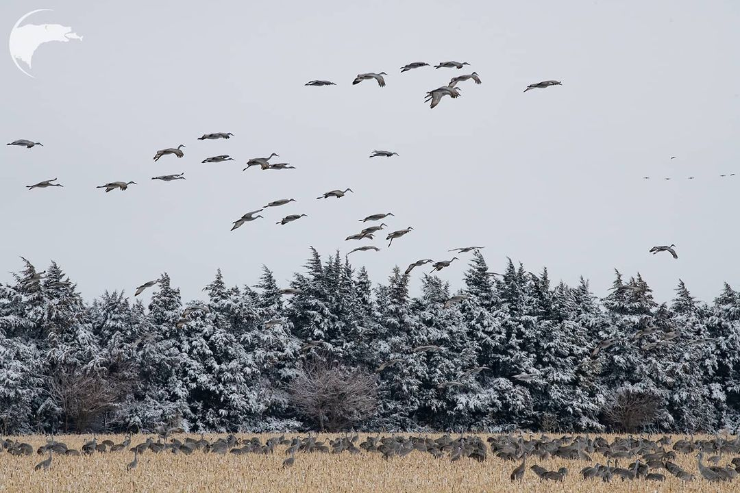 Дикие животные и птицы на снимках Томаса Мангельсена