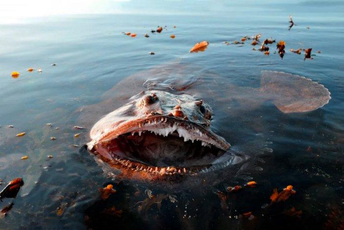 Почему глубоководные обитатели такие страшные