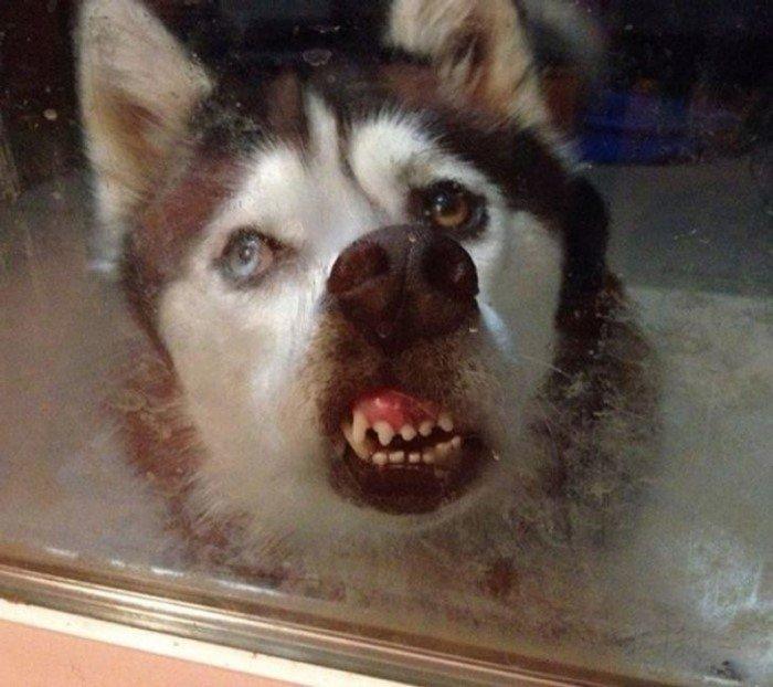 Забавные мордахи животных, которые плохо получились на снимках