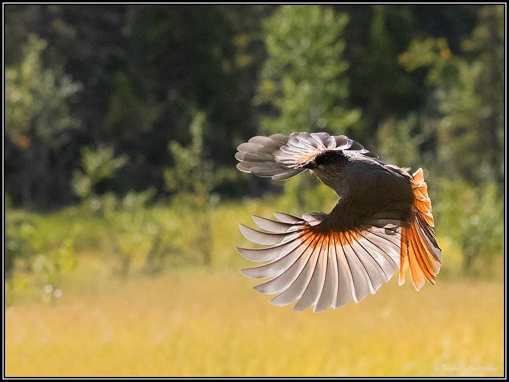Портреты животных и птиц от фотографа Томаса Андерссона