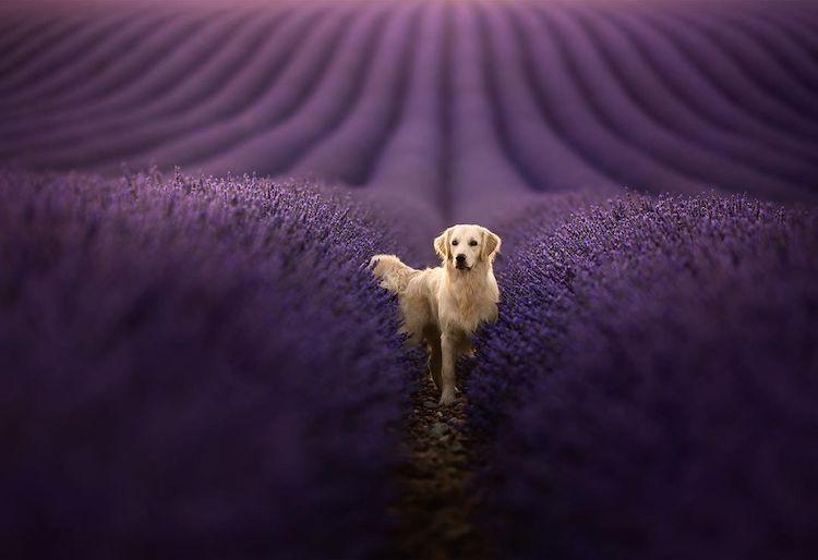 Снимки собак на фоне потрясающих пейзажей