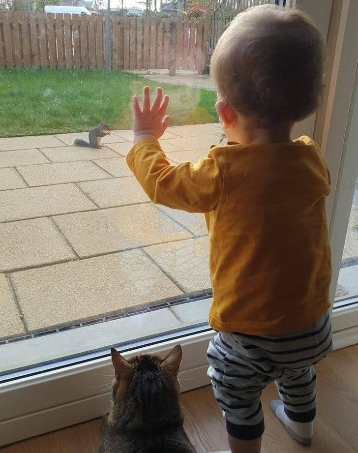 Дети и животные просто созданы друг для друга