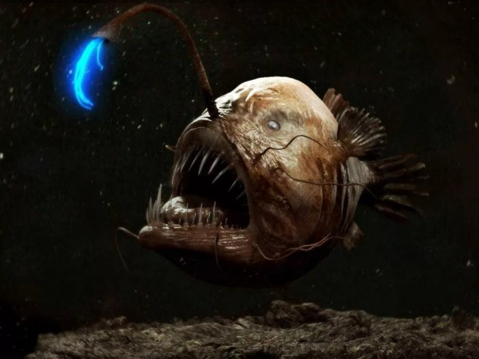 Какими способами рыбачат разные животные?