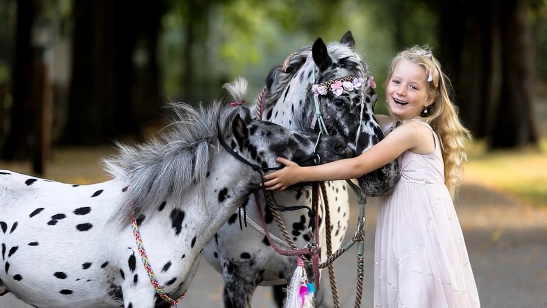 Лошадь, пони и собака одинакового окраса подружились на ферме