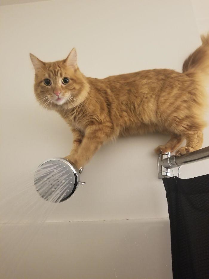 Котики, с которыми происходит что-то непонятное Животные
