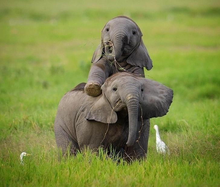 Максимально милые детеныши животных, которые согреют своим видом