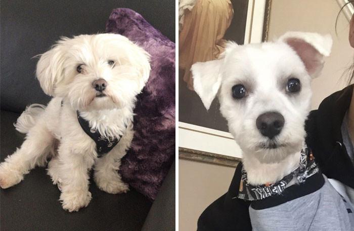 Собаки после визита к грумерам похожи на совершенно других питомцев