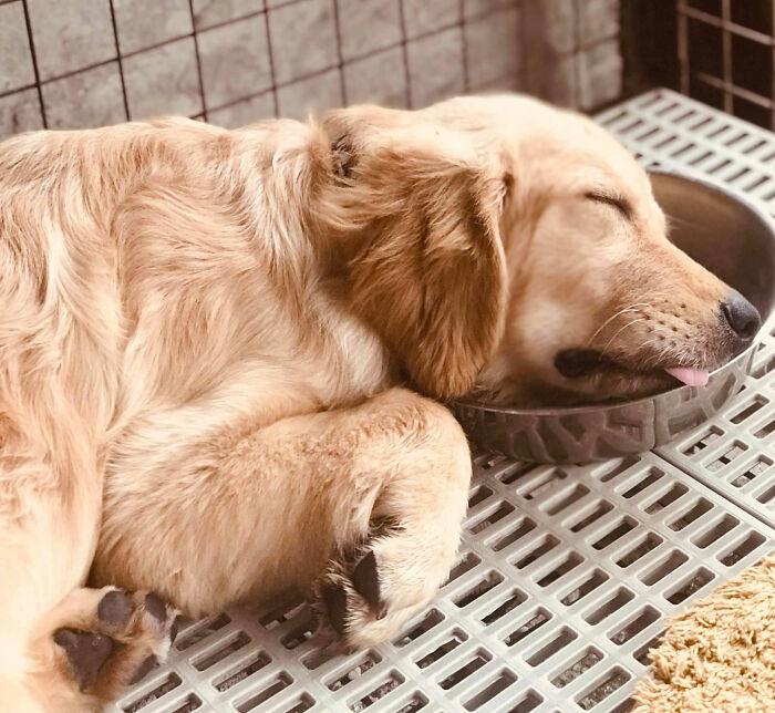 Пёсики заснули в самых неожиданных местах и позах Животные