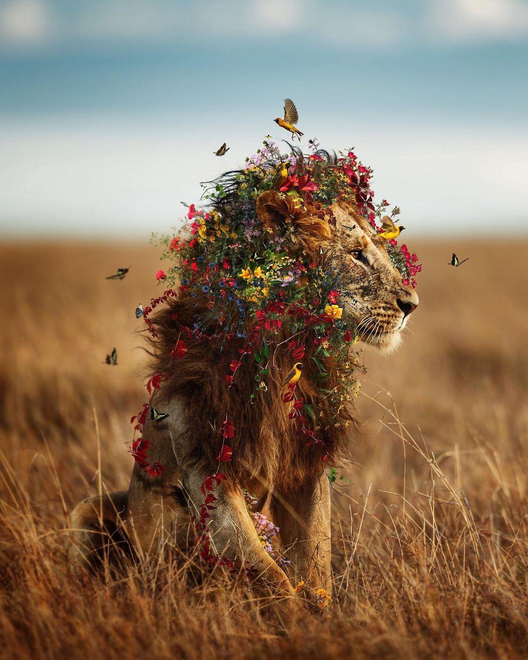 Удивительные фотоманипуляции от Марселя ван Луита
