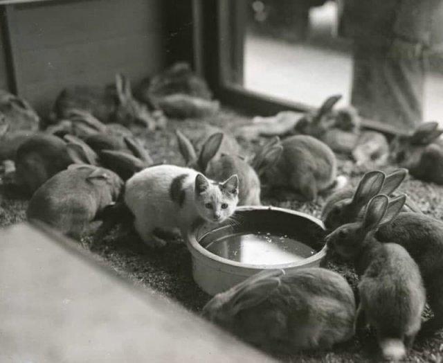 Яркие черно-белые снимки прошлых лет