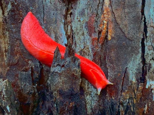Необычные цвета в природе умеют удивлять