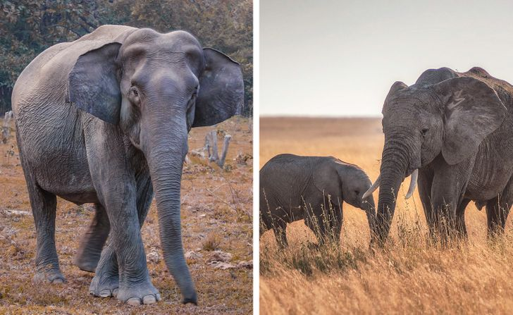 Как долго длится беременность у разных животных