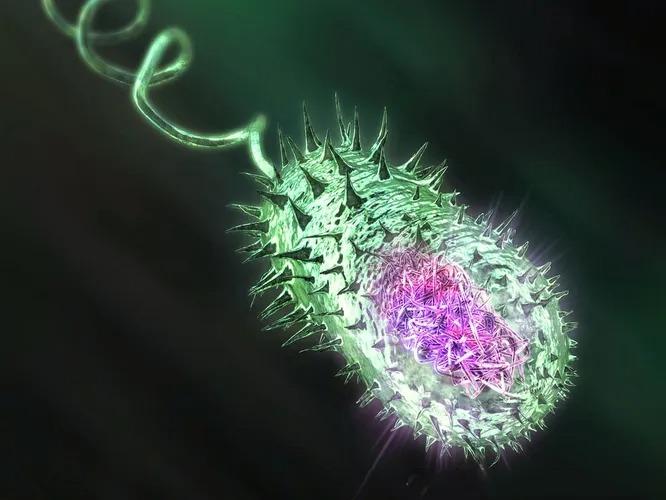 Самые опасные в мире бактерии для человека