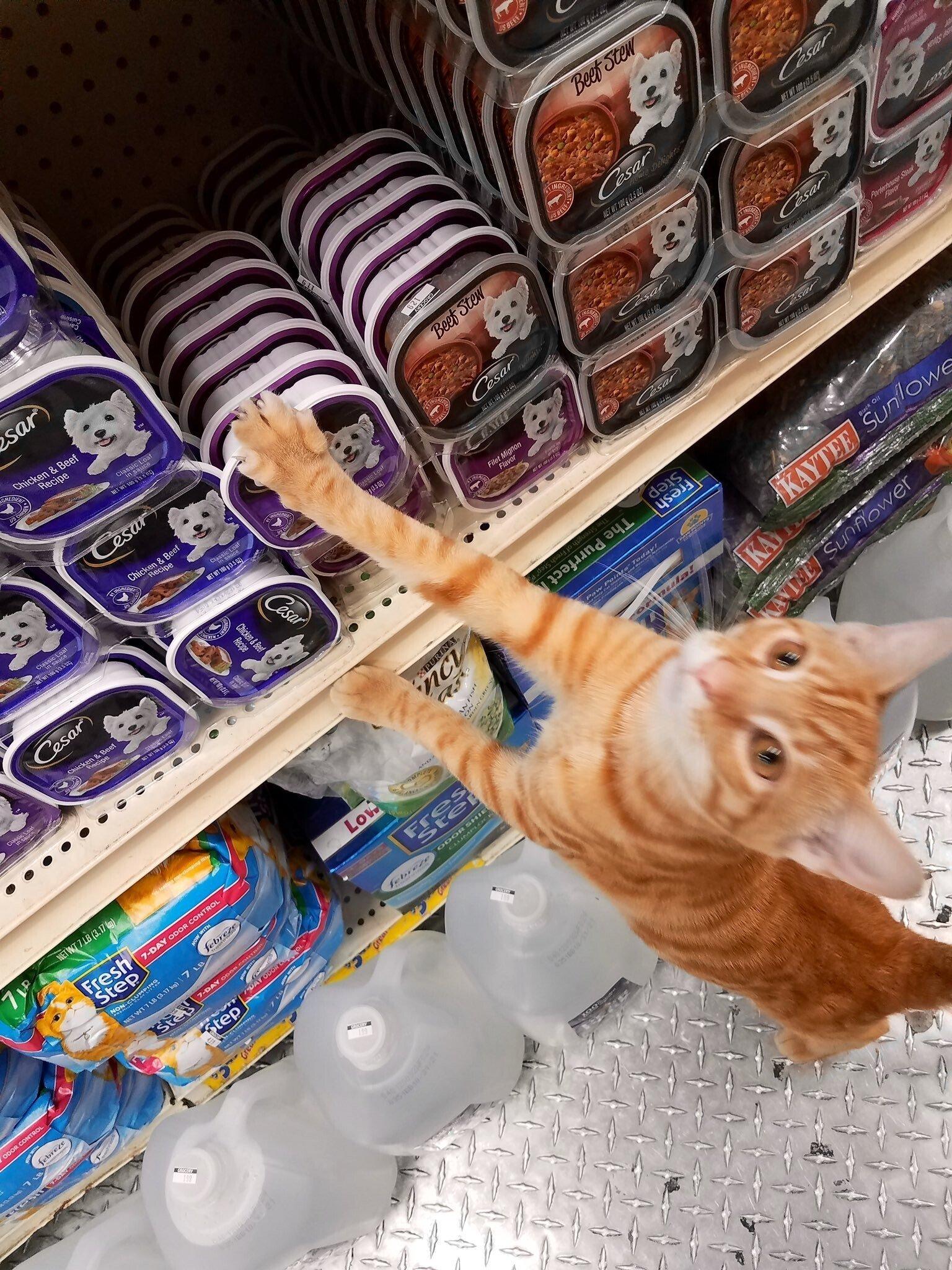 Бездомные котики, которые превратили магазины в свои владения