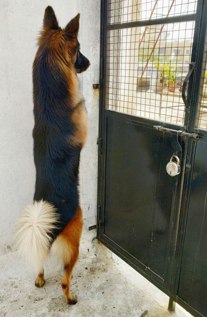 Любопытные домашние животные всегда знают, что творится на улице