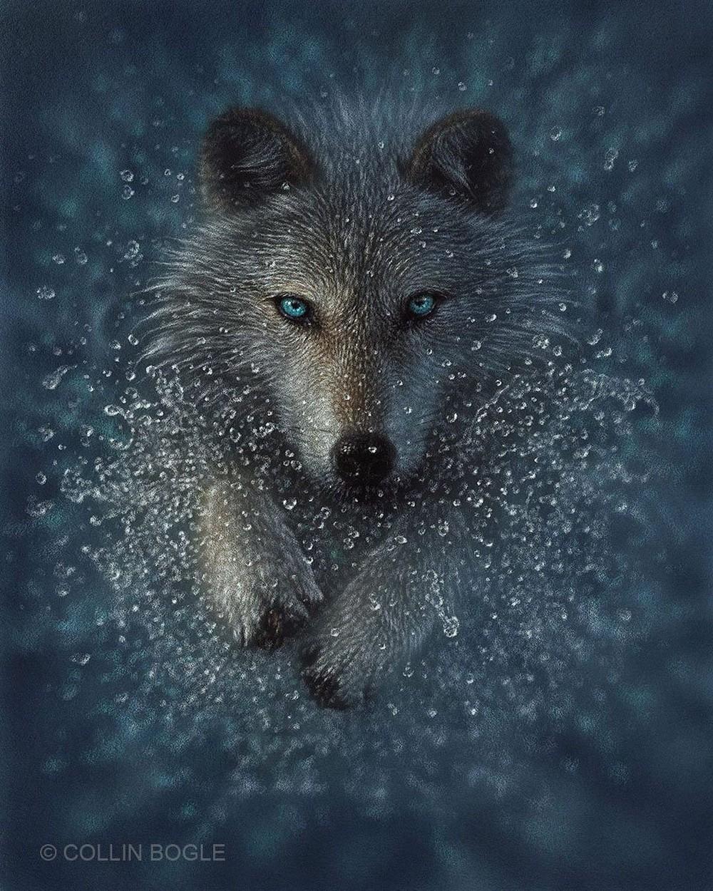 Реалистичные портреты животных от художника Коллина Богла
