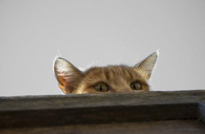 Случаи из истории, когда животных использовали как шпионов