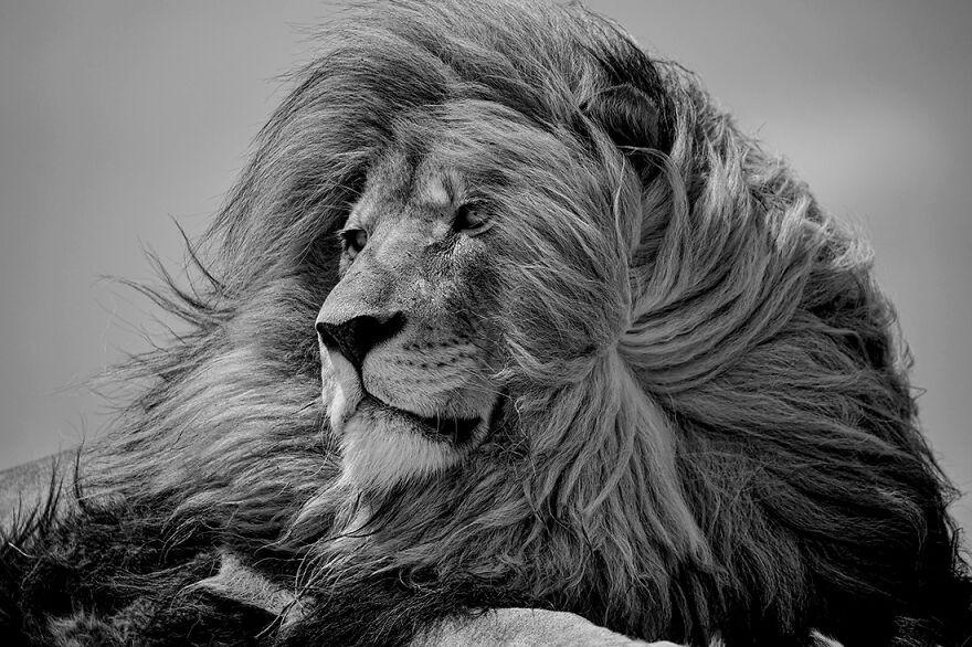 Красота природы на снимках с фотоконкурса 2020 International Photography Awards