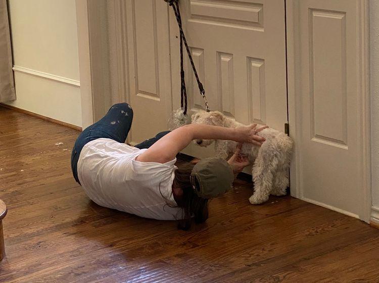 Хозяева решили подстричь своих собак, но лучше бы они обратились к мастеру