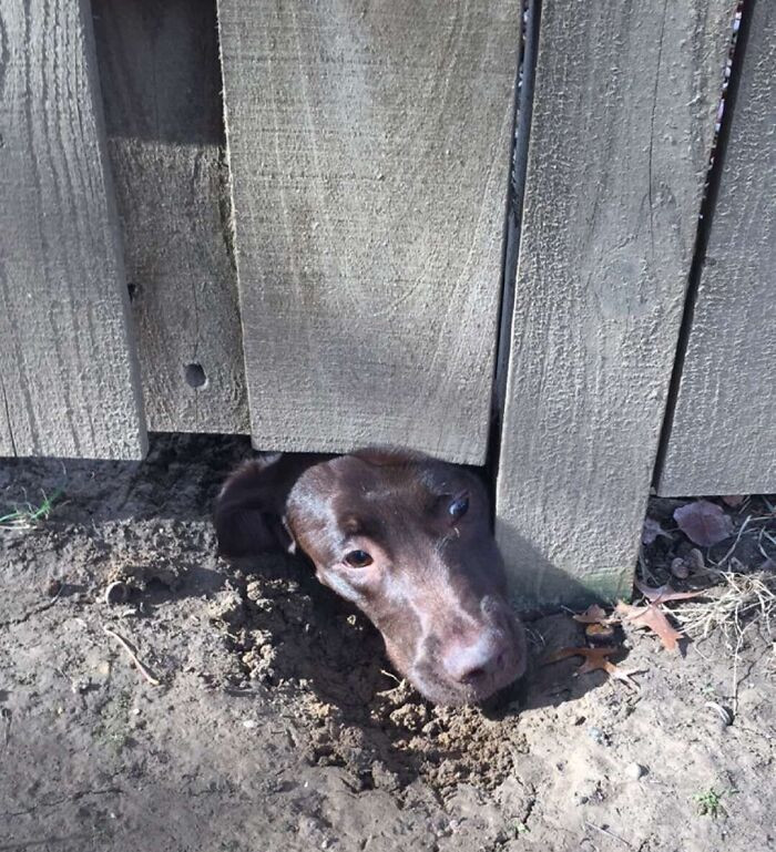 Любопытные собачьи носы, которые хотят знать, что происходит