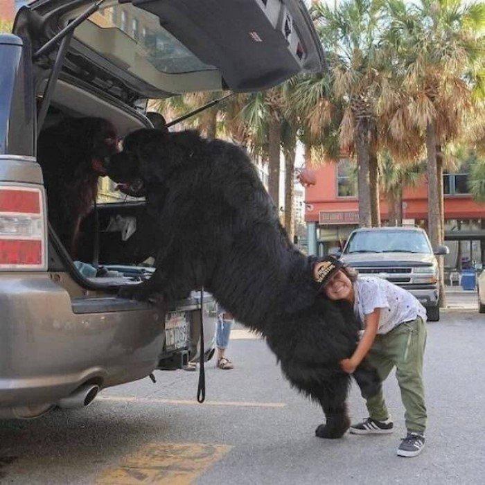 Удивительные размеры некоторых животных