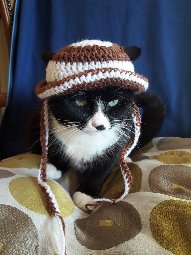 Модные и домашние кошки в чепчиках