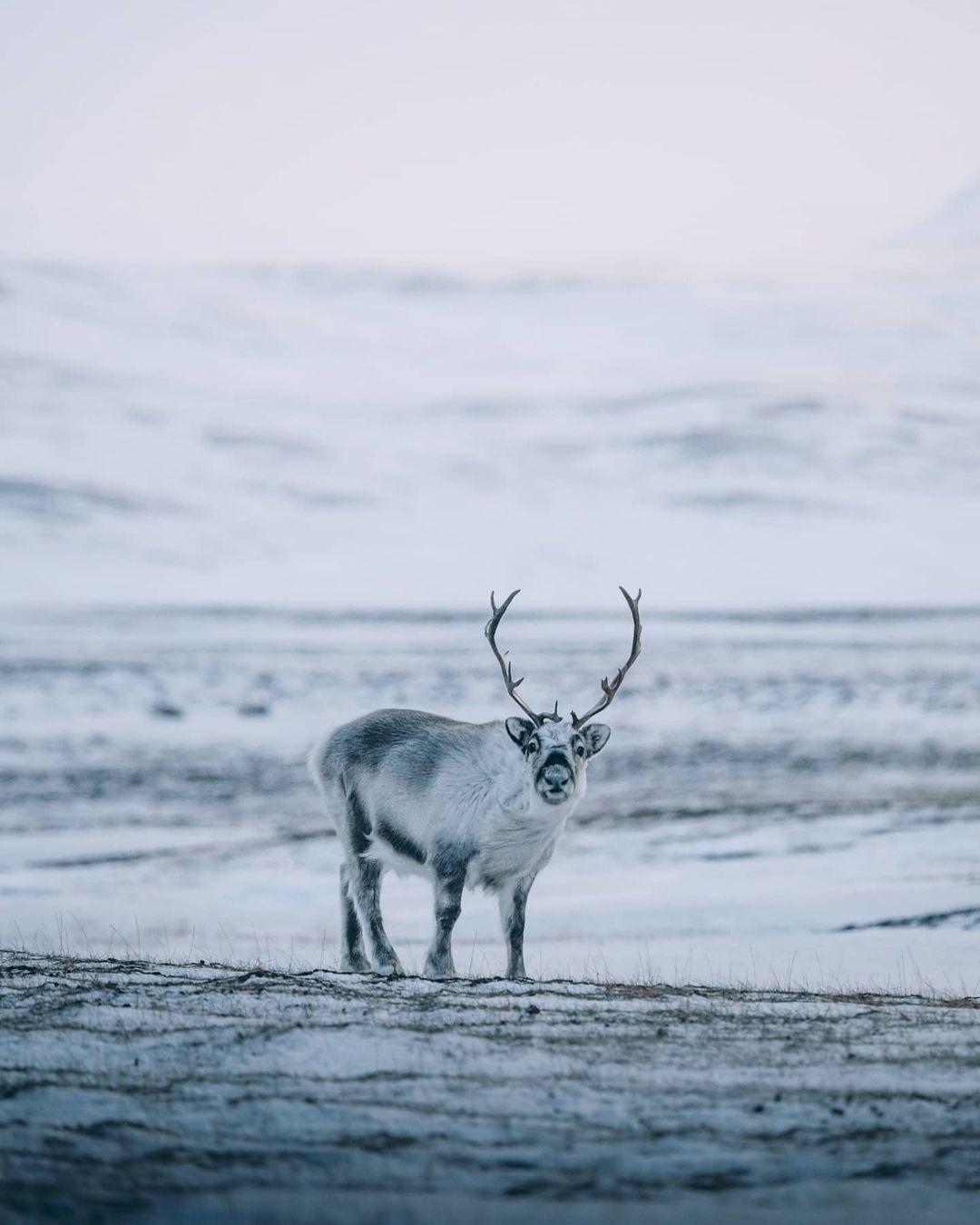 Зимние красоты Австрии и Норвегии на снимках Себастьяна Шейхла