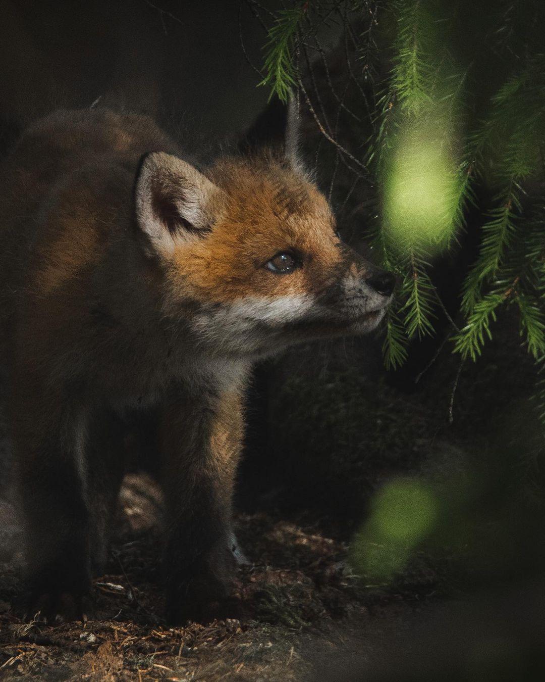 Обитатели леса на снимках Олле Нилссона