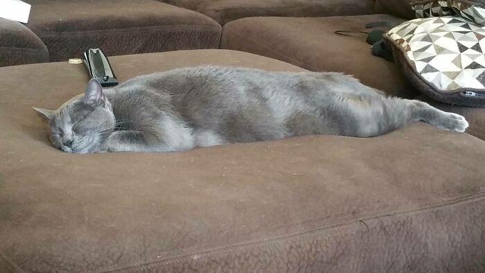 Котики показывают как выглядит идеальный отдых