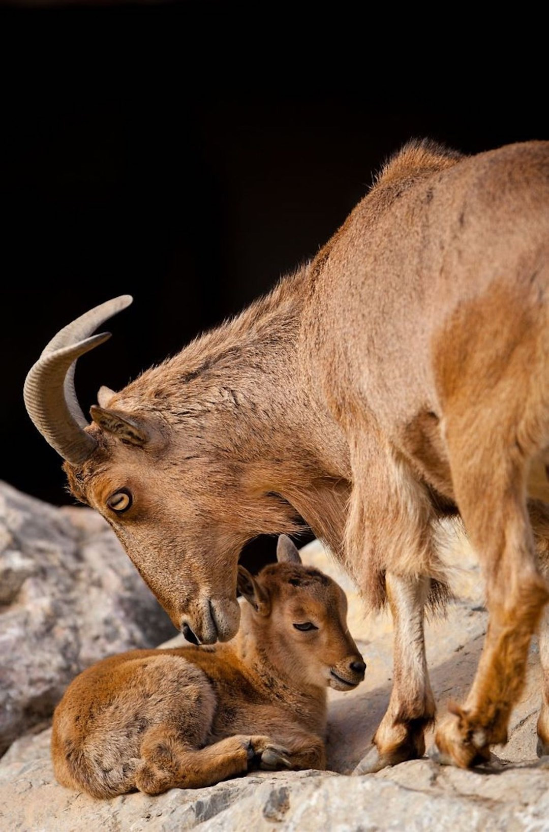 Любовь в мире животных на снимках Горана Анастасовского