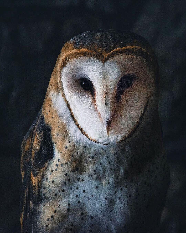 Птицы и дикие животные на снимках Максима Исраэля Кольера