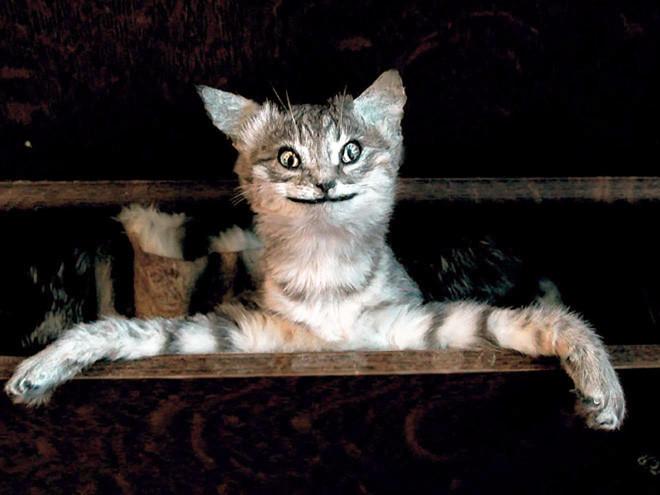 Чучела кошек, попавших в руки упоротых таксидермистов