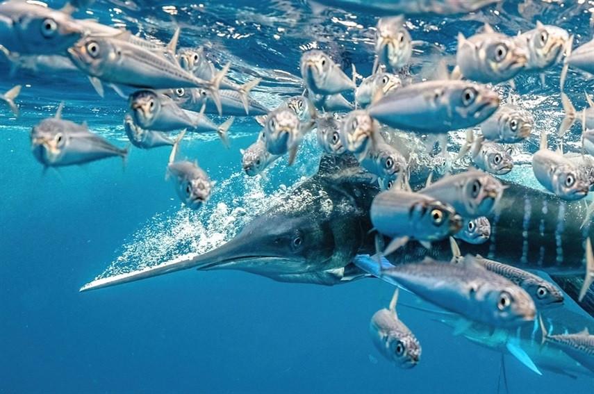 Победители конкурса подводной фотографии 2021 года