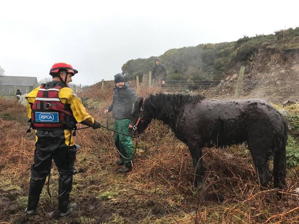 Спасатели помогли вытащить лошадь из болота