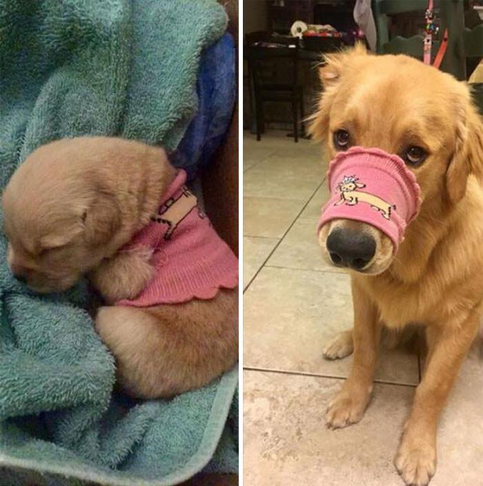 Забавные маленькие щенки, которые выросли в настоящих красавцев