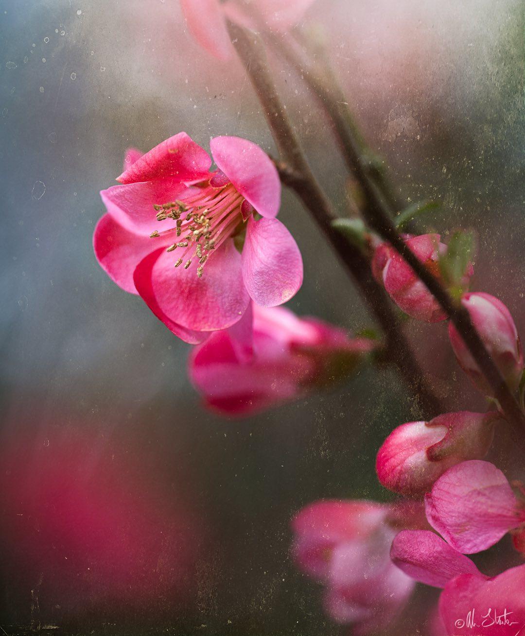 Красота цветов на снимках Элисон Стэйт