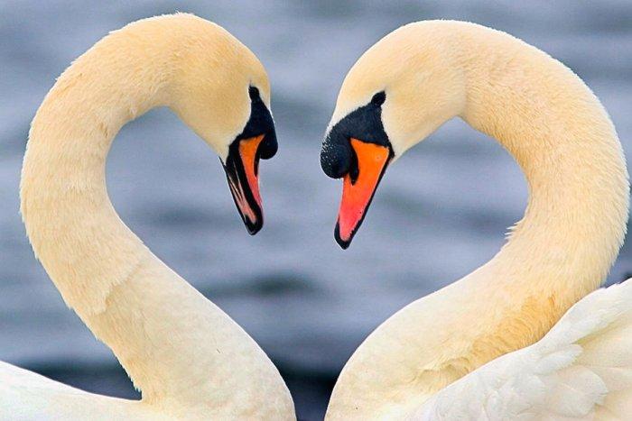 Почему изображение сердечка стало символом любви