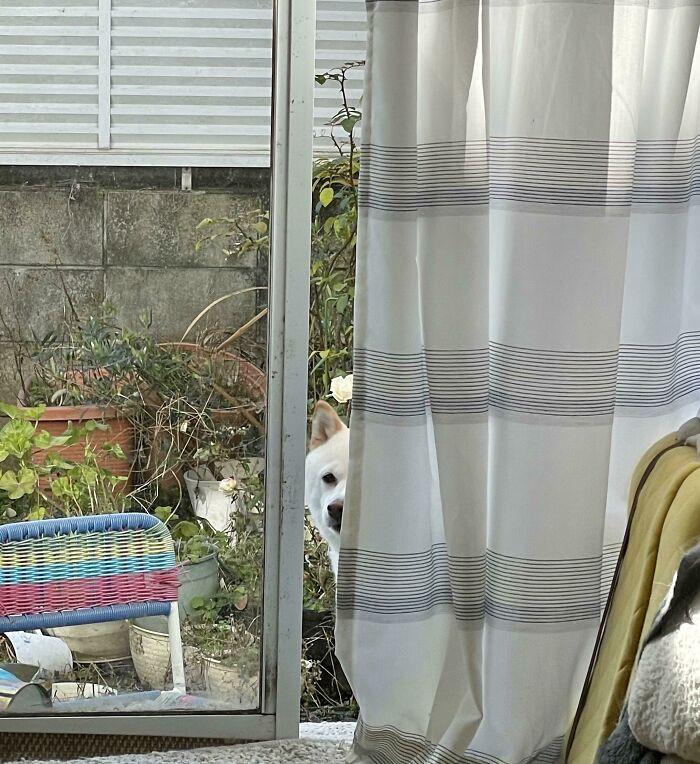 Любопытные собачьи носы, которые не пропустят ни одно событие