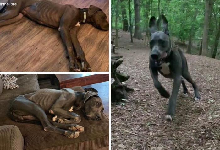 Милые пёсики на снимках до и после того, как нашли себе любящий дом Животные