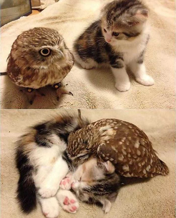 Замечательные примеры дружбы между животными