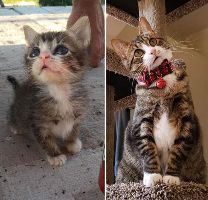 Красивые котики, которые выросли из крошечных пушистых комочков Животные