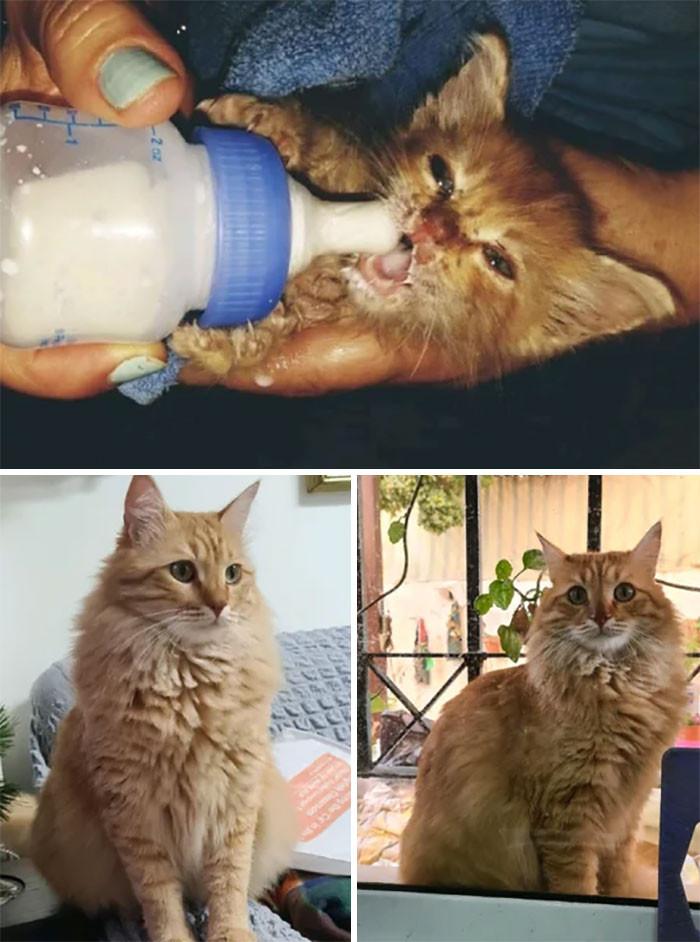 Красивые котики, которые выросли из крошечных пушистых комочков